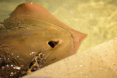 New England Aquarium (Hey_Lee! Photography) Tags: ocean new sea england fish water boston ma photography aquarium ray underwater stingray massachusetts sting creatures 2015 heylee heyleephotography
