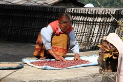 Ghandruk 25 (Mabacam) Tags: nepal homes woman foothills trekking walking landscape outdoors beans scenery village hiking harvest crop annapurna mountainvillage 2015 ghandruk ghandrung annapurnafoothills