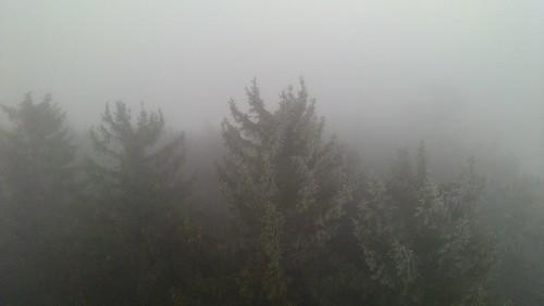 Hutwisch im Nebel 10