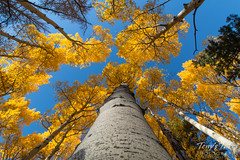 A squirrel's view of fall foliage. Rocky Mountain National Park.