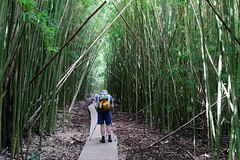 DSC00717_DxO_Grennderung (Jan Dunzweiler) Tags: hawaii jan maui bamboo hanahighway pipiwaitrail oheo bambus oheogulch bambooforest haleakalanationalpark hanahwy hwy360 bambuswald highway360 pipiwai haleakanationalpark dunzweiler haleakanp oheogulch oheo jandunzweiler