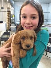 Abigail's boy Auggie on puppy pick day!!