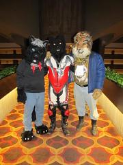 IMG_0761 (2) (raiderwolf22) Tags: illinois midwest rosemont hyatt regency fursuit furcon furfest