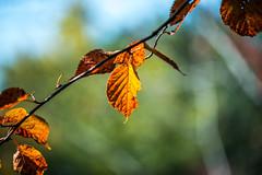 DSC_1259 (Darjeeling_Days) Tags: