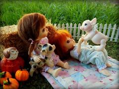 Pumpkin Patch and Piggy's (TutuBella) Tags: piggy owl owlet daisydayes dolls pukifee fairyland emmi sprout daphne niles pumpkins pumpkin patch tinybjd quilt beautifulday