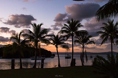 _MG_0210 (eliana bonanno) Tags: australia tramonto sunset landscape landscapes queensland sogno tramontodafavola tropicale tropico palme colori portdouglas cairns romantico romantic quadro dream posto place colors panorama panoramic palmtrees mare sea riflessi reflexes fabulous fabuloussunset favola tropic tropical nuvole clouds