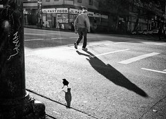 < > (. Jianwei .) Tags: hastingsst vancouver urban bird crow oldman street fuji x70