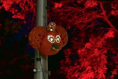 (theleakybrain) Tags: pumpkinnights pumpkin nights mnstatefair p1460104 halloween halloweenwalk minnesota jackolantern jack lantern