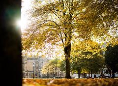TREES SUN LEAVES (Robin Niedojadlo) Tags: light autumn colour brown leaves happy sun city parks life fun