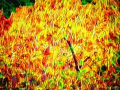 Autumn Winds (Maurizio Scotsman De Vita) Tags: leaves foglie mixedmedia landscape astrazioni vento abstractions paesaggio abstract plantsflowers wind panorama subjectlandscape alberi trees astratto impressionistic impressionistico