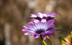 DieZwei (fotoerdmann) Tags: farben colour blte 100mm naturaufnahme flickr canon700d thorstenerdmann germany natur macro fotoerdmann flower bokeh blume lightroom