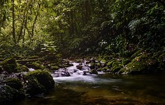 Jungle rays (pixel wave) Tags: explore hike travel southamerica colombia tropical rainforest forest water creek rays light jungle