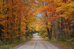 C'est La Vie (Bert CR) Tags: backroads fall fallcolors unsettled tornado darkskies doomandgloom colorful warmlight road appreciation outdoors canon40d cestlavie