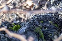via musgo (El Sumiller fiel) Tags: musgo viedo vid noviembre