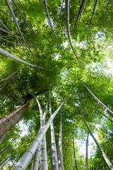Canopy of Kameyama-koen (Chase Hoffman) Tags: green chasehoffman chasehoffmanphotography color fujifilm fujifilmxt10 fuji fujinonxf23mmf14r bamboo grove kameyamakoen kameyama forest landscape nature