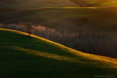 Vitaleta's Tree (Francesco Bianchi) Tags: valdorcia vitaleta lightsandshadows tree sunset