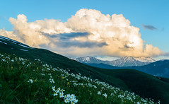 Meadow with flowers in mountains (oleksandr.mazur) Tags: above alpine altitude caucasus cliff cloud cloudscape crag day dusk evening flowers fluffy freedom georgia glacier grass high hill ice icecap landscape light mountain nature outdoor peaceful peak range relax ridge rock scenic sky slope snow snowy summer summit sun sunlight sunny sunset sunshine top tourism travel vacation view wall wide