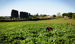 (massimopisani1972) Tags: parco degli acquedotti roma rome italia italy massimopisani massimo pisani orto coltivazione contadina contadino vegetablegarden growing farmer nikon d610 20300