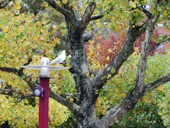 (Miranda Ruiter) Tags: amsterdam museumplein outdoor fall bird seagull animal