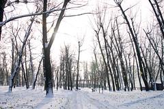 _DSC0219 (Artem_Kotenko) Tags: sony a77 a77v minolta 2485 2485mm kyiv winter autumn sun river bridge park snow cold portrait water walkway