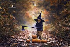 Small boy and pumpkins (monikaszypua-bilska) Tags: pumpkin child portrait
