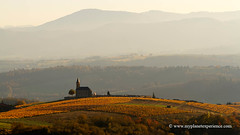Fall colors - France (My Planet Experience) Tags: church vineyard vine wine colour automn fall color sunset golden yellow red green black mist misty nature landscape panorama horizontal beaujolais rhonealpes france fr myplanetexperience wwwmyplanetexperiencecom