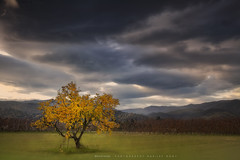 The autumn tree (Marijke M2011) Tags: tree autumn landscape outdoor countryside tourism thevalleyofthett languedocroussillon pyrnesorientales atmosphere canon france sky clouds serene