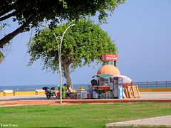 Mersin-2015-1002 (emirerten) Tags: vacation orange tree art station turkey square palm mersin avenue palmiye akdeniz yunus vitamin fenerbahe sanat kltrpark bulvar mediterrian sshavuzu