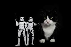 Imperial Storm Trooper
