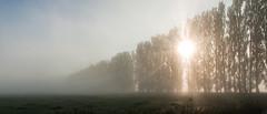 2015-10-02 mist-5 (Aschwinn) Tags: mist herfst tegenlicht zonsopkomst middendelftland