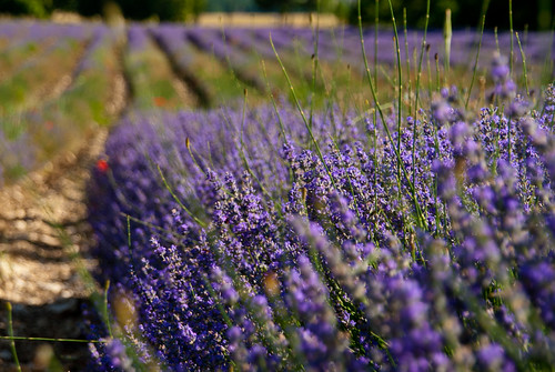 Provence_09_139