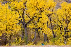Photographer's Autumn (Shi Yu) Tags: california san sandiego diego places shiyuphotography yushiphotography sunstonephotography shiyuphotographyyushiphotographysunstonephotography