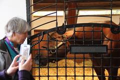 Tapizar at Gainesway Farm 2015 (first_dude) Tags: kentucky horseracing thoroughbred tapizar gaineswayfarm