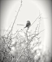 #baby #bw #cute #hdr #love #nature  #blackandwhite #petsandanimals #photography  #bird #birds #طير #طيور #تصويري #sonyalpha #sony #alpha (photography AbdullahAlSaeed) Tags: blackandwhite bw baby cute bird love nature birds photography sony alpha hdr petsandanimals تصويري طير طيور sonyalpha