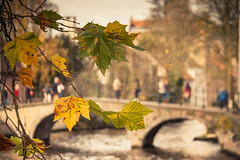 Autumn In Bruges/ Automne  Bruges... (Gilderic Photography) Tags: city autumn leaves automne canon belgium belgique belgie brugge bruges feuille 500d gilderic