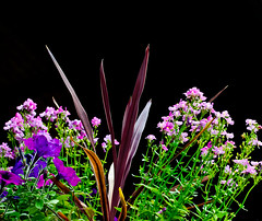 Off Center Nature. (Omygodtom) Tags: wild abstract flower art nature garden nikon flickr dof natural bokeh explorer scene existinglight bouquet setting wildflower tamron90mm d7000
