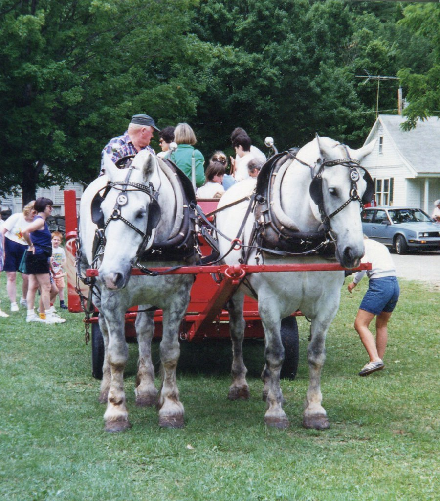 Animals Pulling Wagon : The world s best photos of drafthorse and pulling flickr