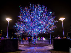Vitruvian Lights 2015-12 (MikeyBNguyen) Tags: us texas unitedstates christmastree christmaslights christmastrees addison vitruvianpark vitruvianlights