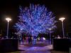 Vitruvian Lights 2015-12 (MikeyBNguyen) Tags: us texas unitedstates christmastree christmaslights christmastrees addison vitruvianpark vitruvianlights