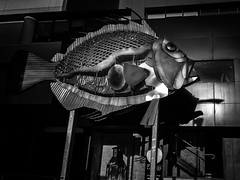 the bait (Yiannis Yiasaris) Tags: city people blackandwhite monochrome streetphotography australia melbourne pancake ultrawideangle sony16mm sonya6000