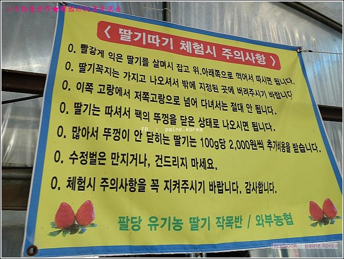 草莓園採草莓 (5).JPG