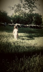 () Tags: serbia  srbija dete ovce srem   pejza  velikaremeta