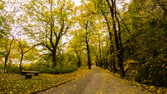 autumn (dochev30) Tags: autumn forest trees yellow nature beautiful fall leaves lg g5 mobile photography halloween
