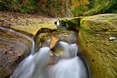 Schwarzwasser (Cdric Pclard) Tags: longue pose ruisseau rivire suisse sousbois