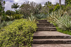 Stairway to... (Rodolfo Ribas) Tags: stairway nature nikon7200 d7200 landscape lightroom trees for