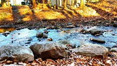 Molly Ann's Brook (SurFeRGiRL30) Tags: brook mollyannesbrook nj newjersey backyard water stream rocks nature beautiful leaves autumn lateautumn fall