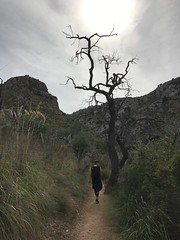 (electricgecko) Tags: palma mallorca iphone mobile outdoor hike eremitagedebedlem bedlem balears