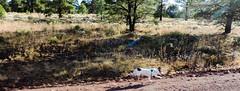 My Wife 2 Legged Dog! (Douglas H Wood) Tags: jackrussell phoebe exercise williamsparks arizona pets