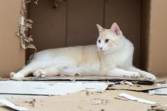Gatos e suas caixas (felipe sahd) Tags: city cidade fortaleza cear brasil gatos felinos
