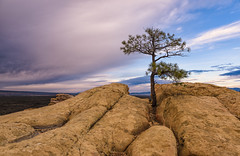 Trail's End (Russmosis) Tags: nature landscapephotography sunset cloudy day rocks tree vegetation sandstone elmalpaisnationalmonument newmexico americansouthwest